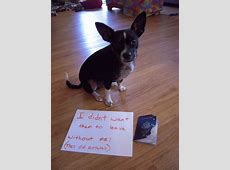 The Best Of 'Dog Shaming,' On Tumblr – The Twist Gossip
