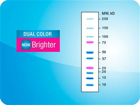 precision plus protein dual color standards from bio rad