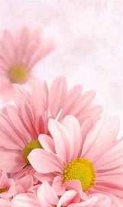 Download Phone Wallpapers Flowers Gallery