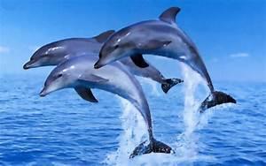 Yunus Balıkları Hakkında İlginç Bilgiler | Haber ve Hayat