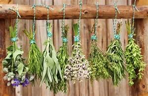 Holzstamm Richtig Trocknen : heilpflanzen richtig trocknen und aufbewahren phytodoc ~ Eleganceandgraceweddings.com Haus und Dekorationen