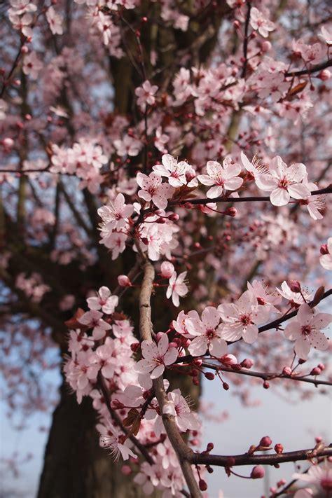 Free Images : tree branch flower petal food spring