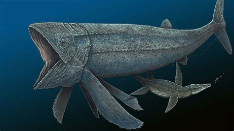 Whale Fish