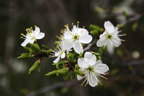 cuales son las flores de invierno erenovablecom