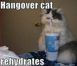 lol funny cat meme involving alcohol xD | Jokes for Class ...