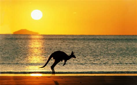 Sun Roo by Kangaroo Hopping Across The Australian Wallpaper