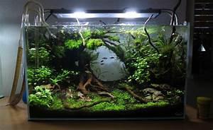 Aquarium Einrichten 60l :  ~ Michelbontemps.com Haus und Dekorationen
