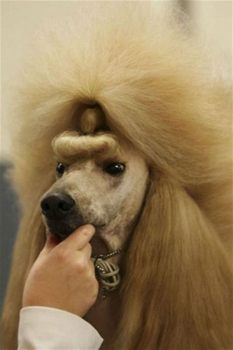 hilarious dog haircuts  pics izismilecom