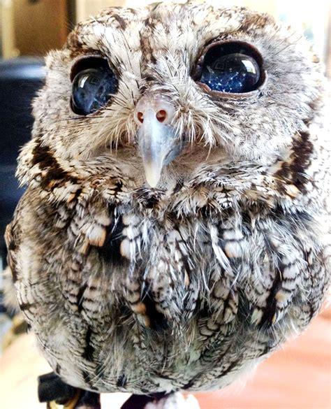owl   clip art  clip art  clipart