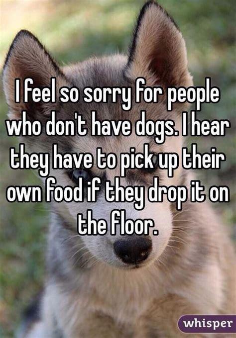 feel   people  dogs jokeitupcom