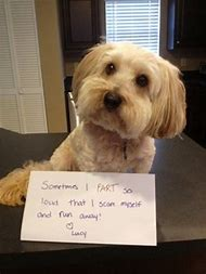 Pet Shaming Funny Dog Pictures