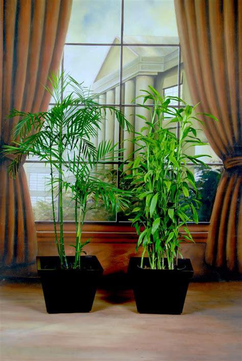 harga tanaman indoor tanamanbaru