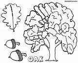 Oak Coloring Pages Tree Sheet Colorings sketch template