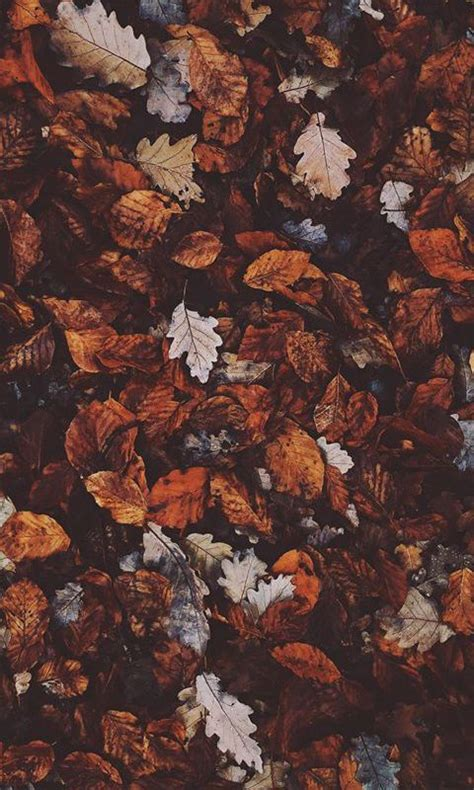 Fall Backgrounds For Iphone Aesthetic by Crunchy Leaves Autumn Leaves Autumn Activities