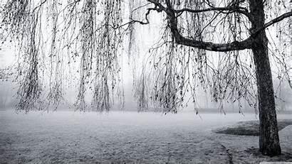 Spring Mist 4k Desktop Ultra Wallpapers Wide