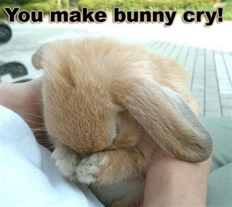 emotional support bunny cry popehat