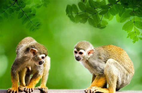 Зошто животните во Јужна Америка се помали од оние на ...