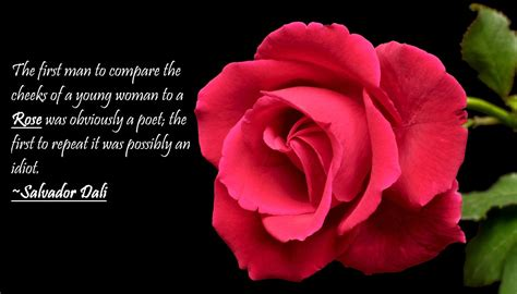 pin  sarah pka  flowers pinterest rose quotes