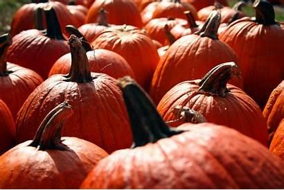 Pumpkin Wallpapers Fall Background Pumpkins Backgrounds Autumn