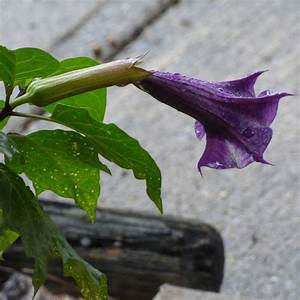 Poisonous, Plants, In, The, Home, Garden, What, Are, Common, Garden, Plants, That, Are, Toxic