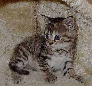 Katzen Fernhalten Von Möbeln : tierschutz nienburg video ~ Michelbontemps.com Haus und Dekorationen