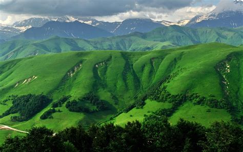 grass green mountains trees wallpapers grass green