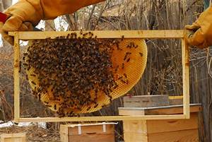 Backwards Beekeeping | Backyard Ecosystem