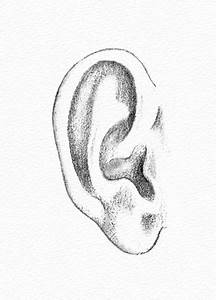Pencil Portraits - How to Draw an Ear