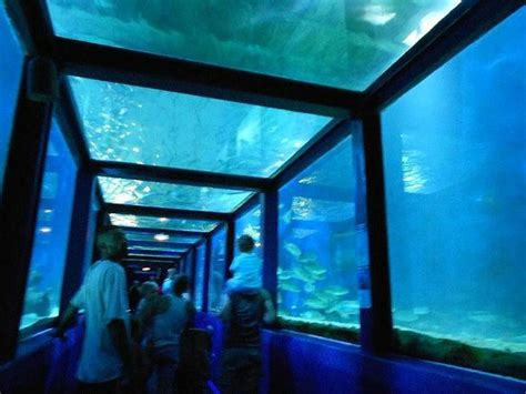 le tunnel des requins picture of seaquarium le grau du