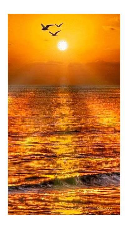 Sunset Hx Weheartit Entry Sun Flower Yellow