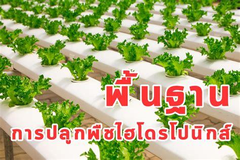 พื้นฐานการปลูกพืชไฮโดรโปนิกส์ แบบ ง่ายๆ - Coach Nong ...
