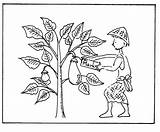 Mustard Coloring Seed Parable Pages Plant Drawing Colouring Template Sketch Popular Getdrawings Templates sketch template