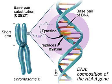 Genetic Diagram Gene Dna by Haemochromatosis Dr Douglas Samuel