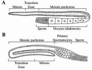 Anatomy Of Wild