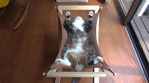 Kitten In A Hammock by Cat Hammock 16 Pictures Cat Dompict