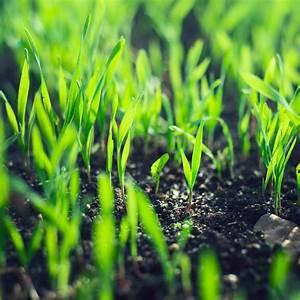 Semer Gazon Periode : petit jardin 5 astuces pour bien l 39 am nager ~ Melissatoandfro.com Idées de Décoration