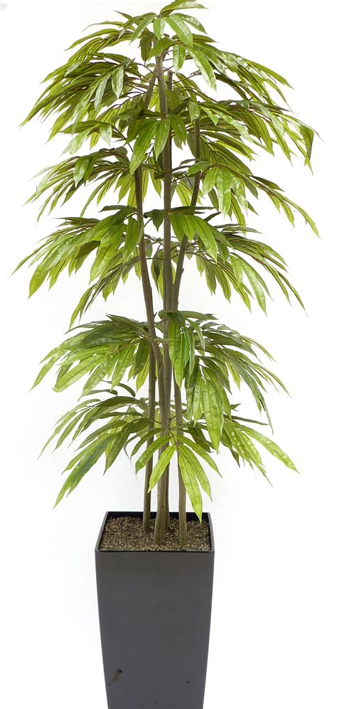 Evergreen Trees And Shrubs  Handmade Artificial Trees. How To Decorate A Sofa Table. Bathroom Decore Ideas. Decorative Wood. Multi Room Audio System. Mohegan Sun Hotel Rooms. Tropical Room Decor. Decorating With Wooden Ladders. Hotel Rooms In Nashville Tn
