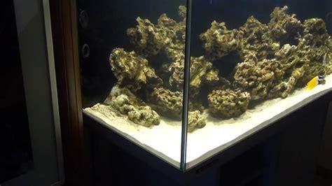 comment cuisiner le coeur de boeuf poissons aquarium eau de mer 28 images aquarium eau de