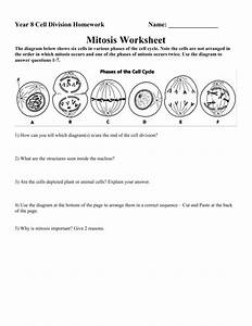 Mitosis Worksheet Answer Key