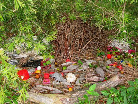nid d oiseau jardinier satin 233 nb jouet dinosaure nids