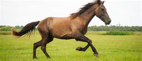 ferrari horse vs mustang horse image gallery mustang horse