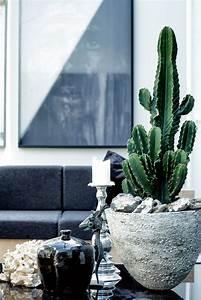 cactus | Indoor Plants | Pinterest