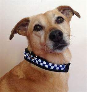 Equisafety Polite Flashing Dog Collar