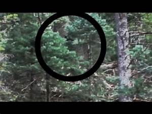 Another Indesputable Proof of Bigfoot: Actual Sasquatch ...