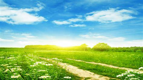 清新青草地风景壁纸图片大全