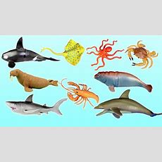 Learn Wild Sea Animal Names For Kids  Animal Toys Video Youtube
