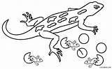 Lizard Coloring Gambar Tokek Mewarnai Kartun Batu Kreasi Warna Menetas Induknya Dengan Kreasiwarna Printable Cool2bkids Malvorlagen Eidechsen Ausmalbilder Konsep Baru sketch template