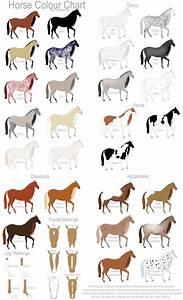 Horse Colour Chart By Gaurdianax On Deviantart