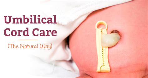 Umbilical Cord In Newborns How To Care For It Naturally