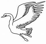 Swan Coloring Flying Printable Schwan Drawing Ausmalbild Fliegender Volando Colorear Cisne Disegni Colorare Zum Bird Ausmalbilder Cigno Kleurplaten Cigni Colouring sketch template